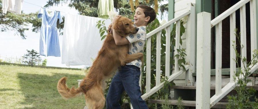 Кадр из фильма Собачья жизнь 2017 - 2