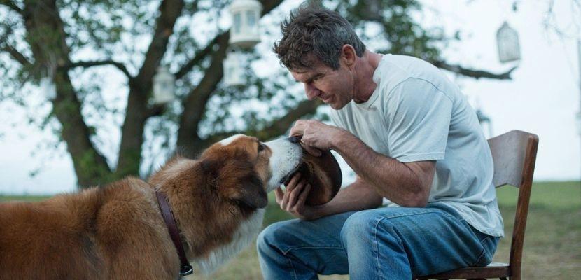 Кадр из фильма Собачья жизнь 2017 - 28