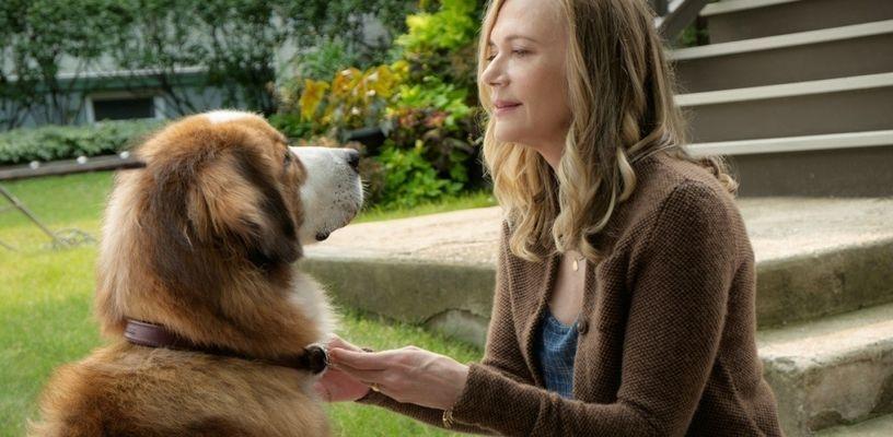 Кадр из фильма Собачья жизнь 2017 - 29