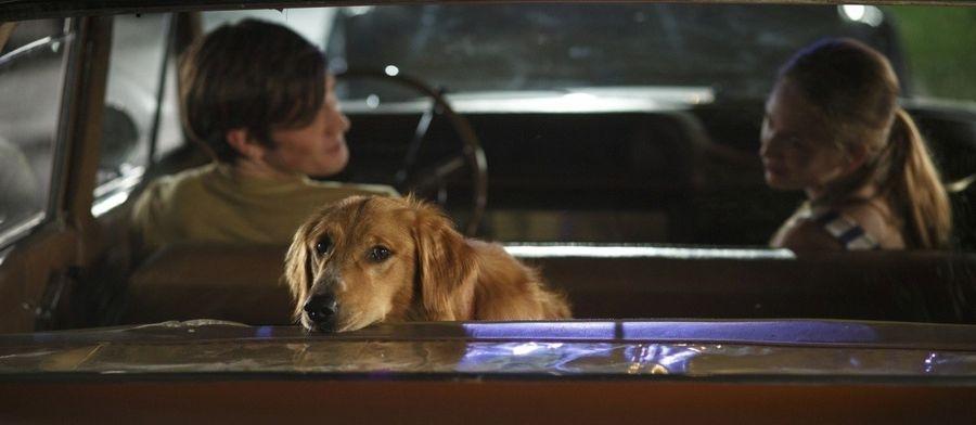 Кадр из фильма Собачья жизнь 2017 - 6
