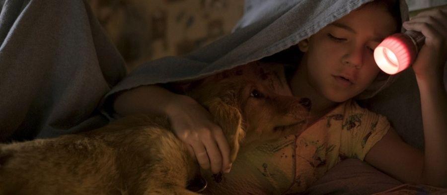 Кадр из фильма Собачья жизнь 2017 - 13