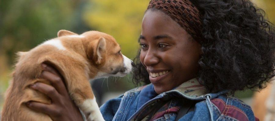 Кадр из фильма Собачья жизнь 2017 - 16